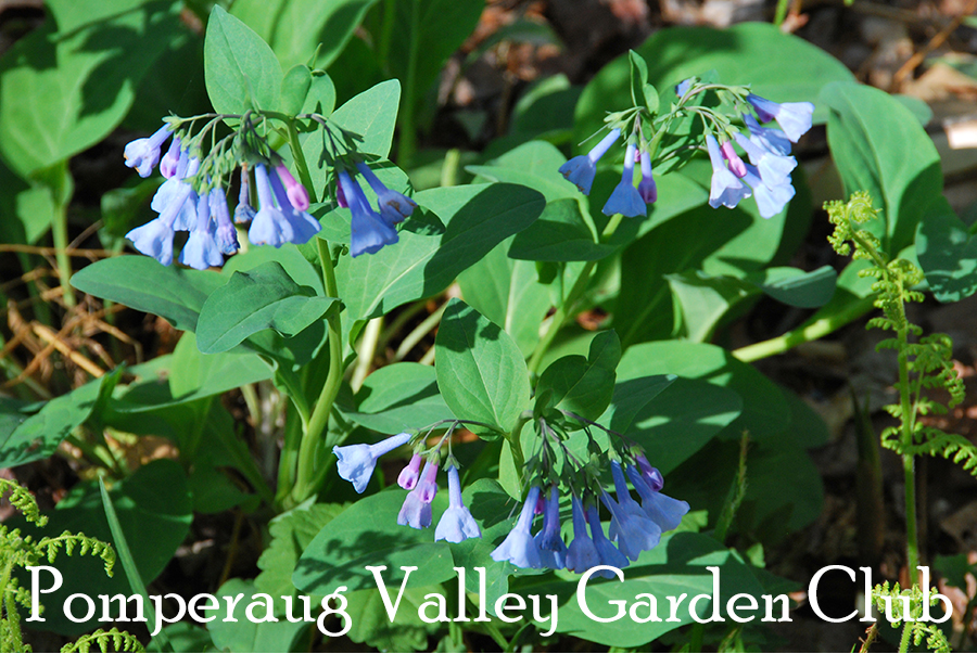 Pomperaug Valley Garden Club - Programs on